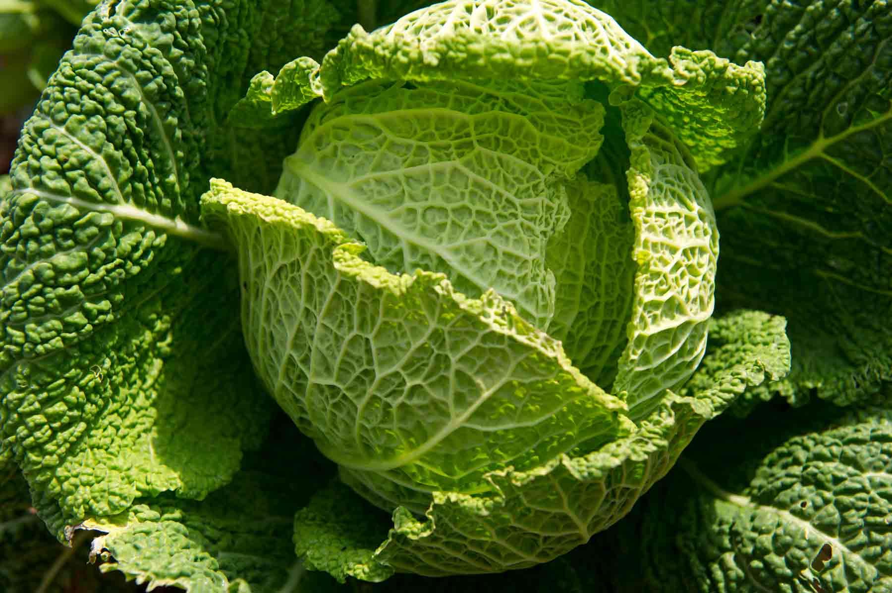 Fresh vegetables Thornes Farm