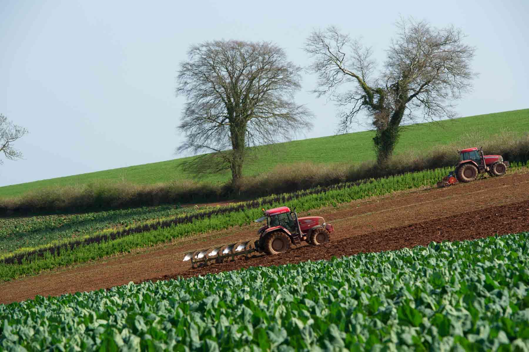 Thornes Farm, Farming in Devon